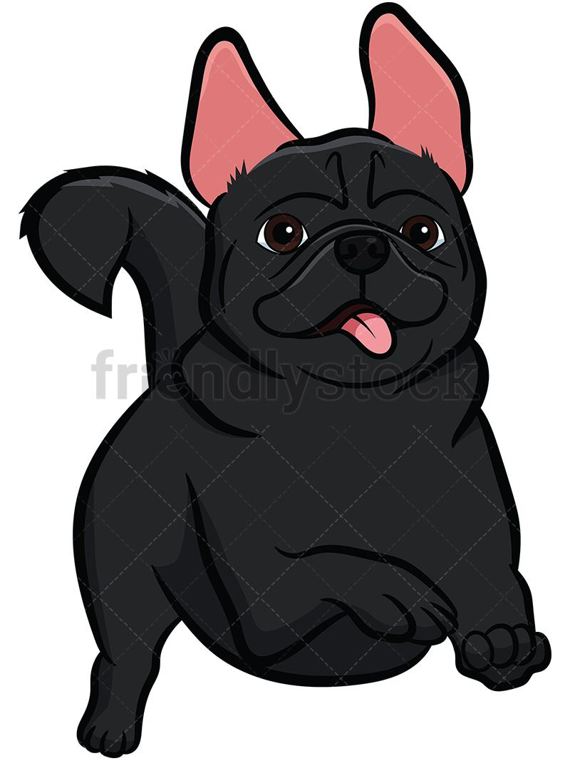 Black Pug Running.