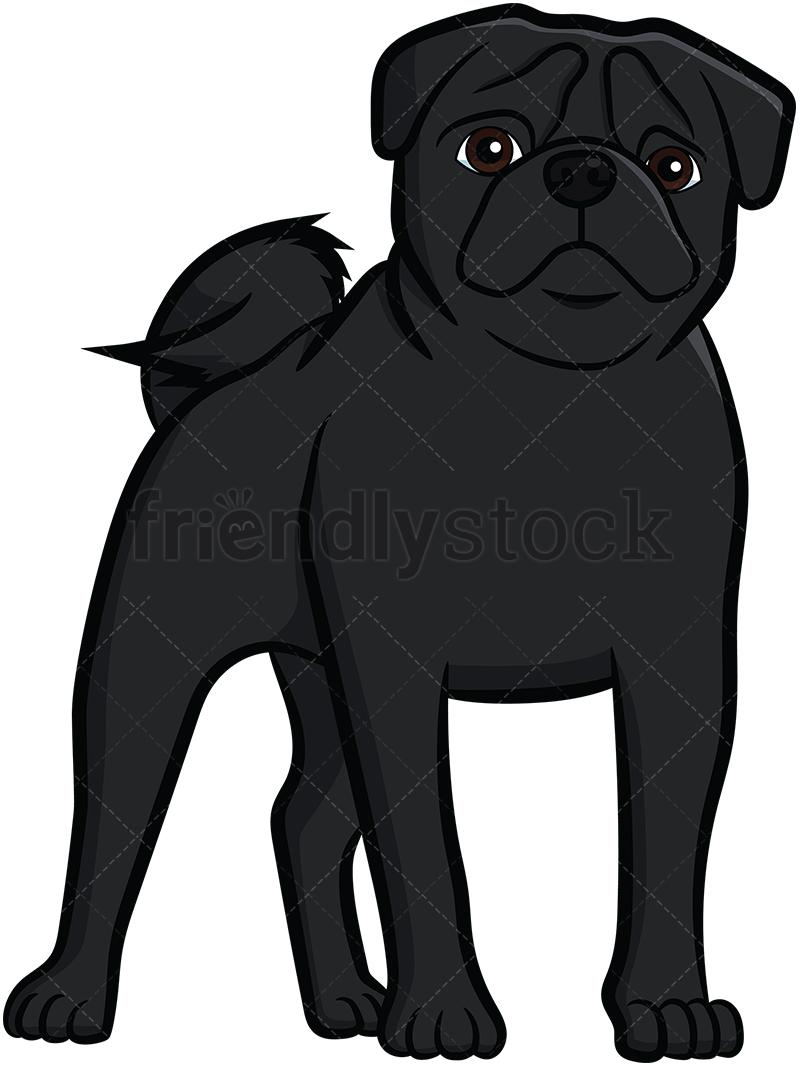 Black Pug Standing.