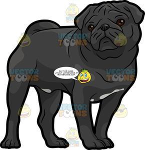 A Tough Black Pug.