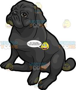 A Cute Little Black Pug.