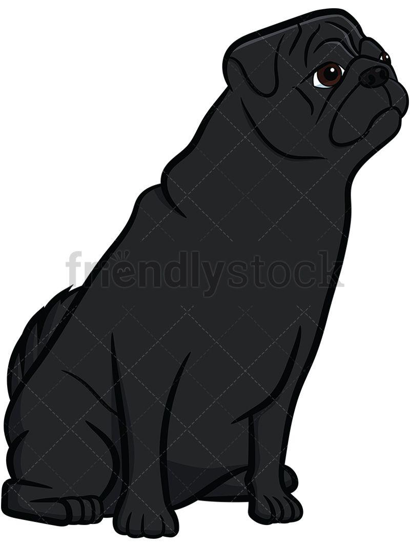 Black Pug Sitting On Hind Legs.