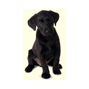 Black lab puppy clipart.