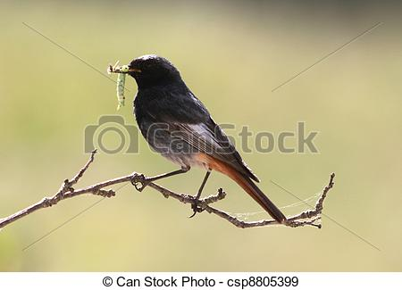 Stock Photographs of Beak full of grubs!.