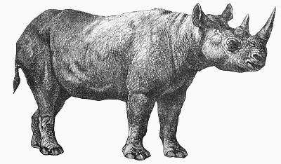 Free Rhinoceros Clipart, 1 page of Public Domain Clip Art.