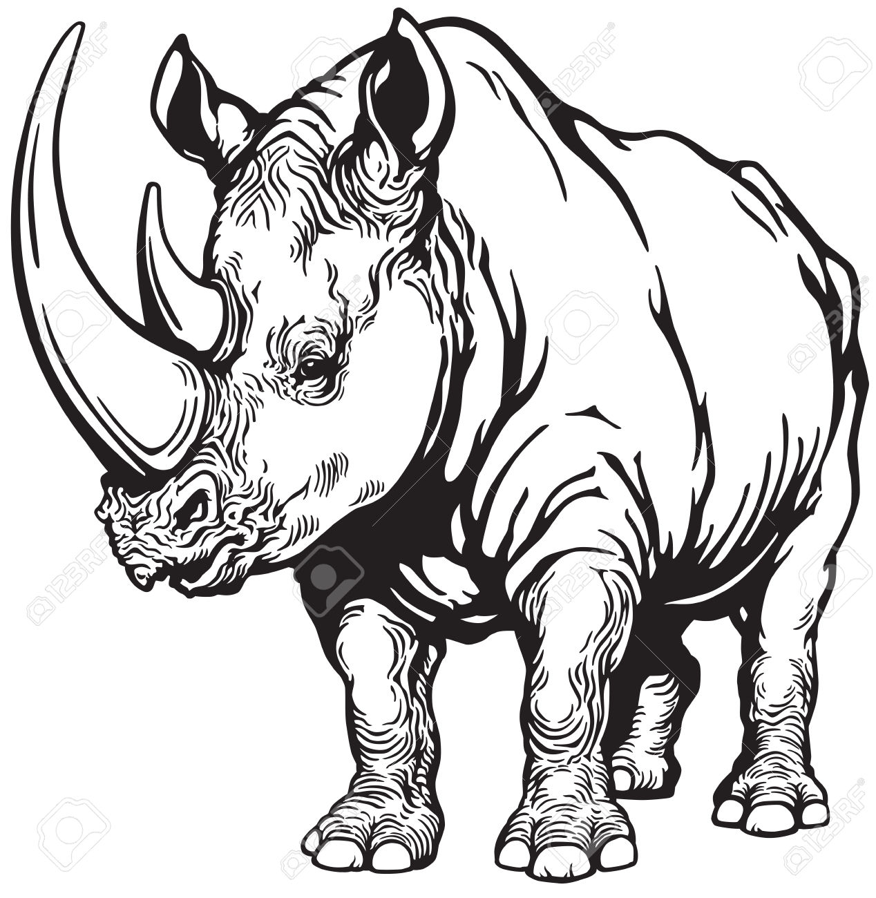 Standing Rhinoceros Or Rhino, Black And White Image Royalty Free.