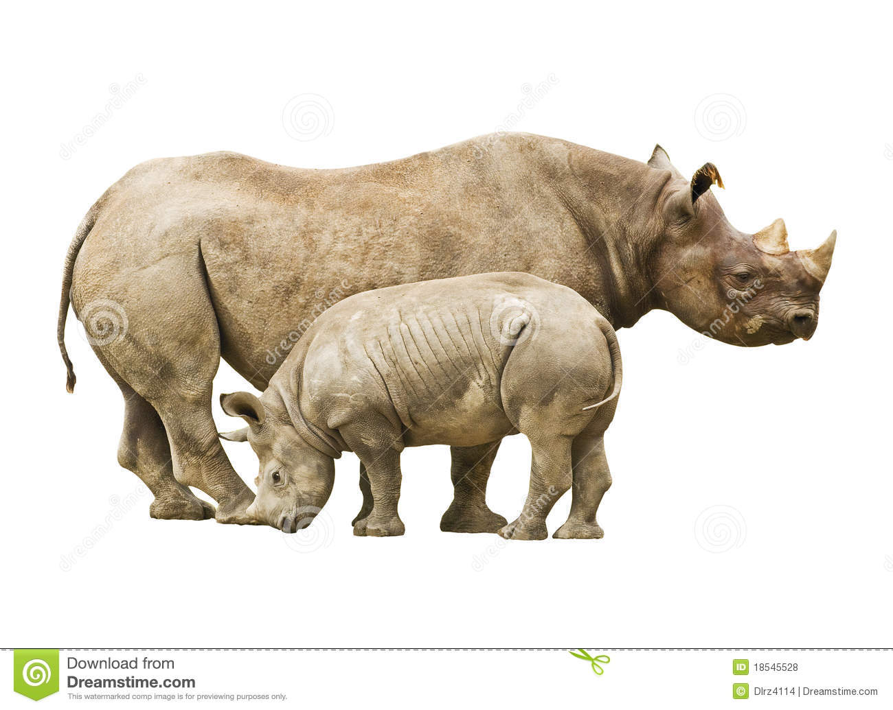 Clipart with no background rhino.