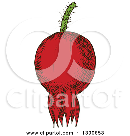Clipart of a Black and White Sketched Briar Fruit Rose Hip.
