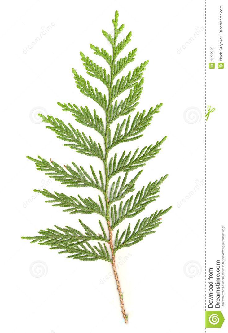 1000+ images about Botanical Inspiration on Pinterest.