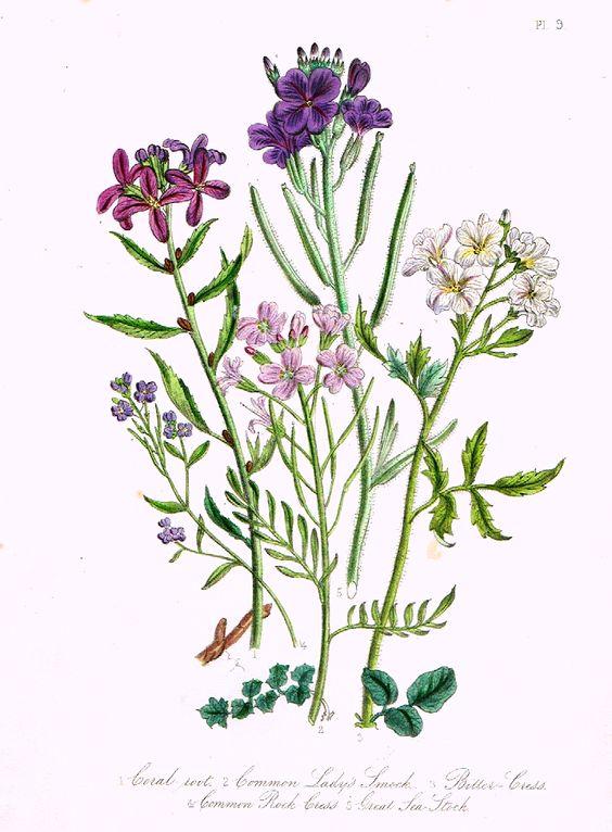 Louden's Wild Flowers.