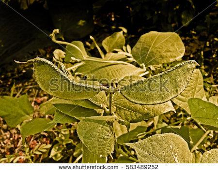 L Plants Stock Photos, Royalty.