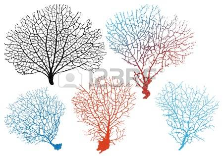2,557 Red Coral Stock Illustrations, Cliparts And Royalty Free Red.