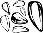 Apple seed clipart black and white.