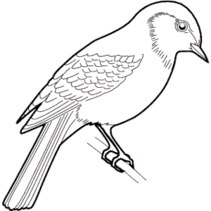 Sparrow clipart black and white.