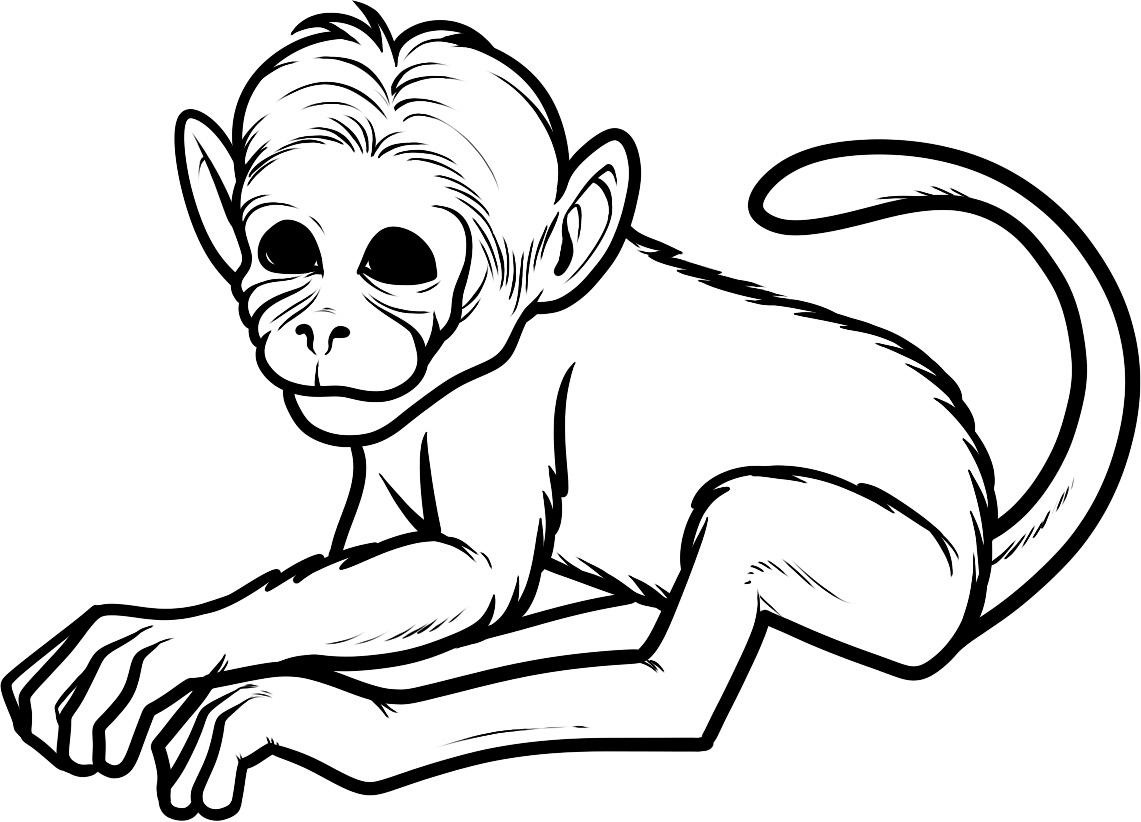 Free Spider Monkey Pictures Free, Download Free Clip Art.