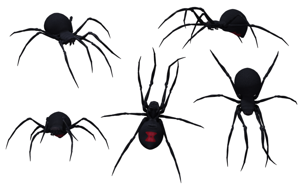 Black Spider PNG Photo.