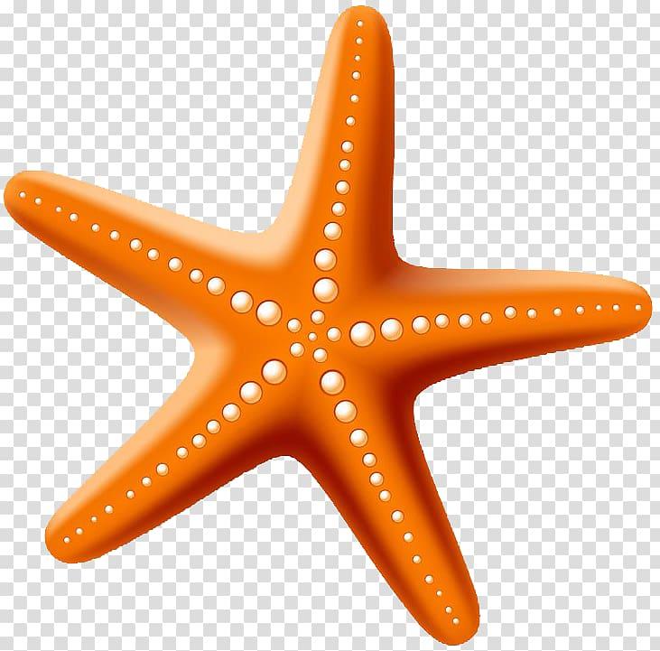 Starfish Drawing , starfish transparent background PNG.