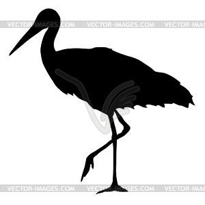 of stork.