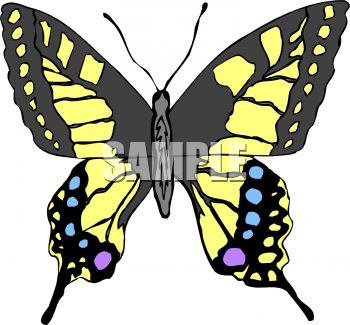 Tiger Swallowtail Butterfly Clip Art.
