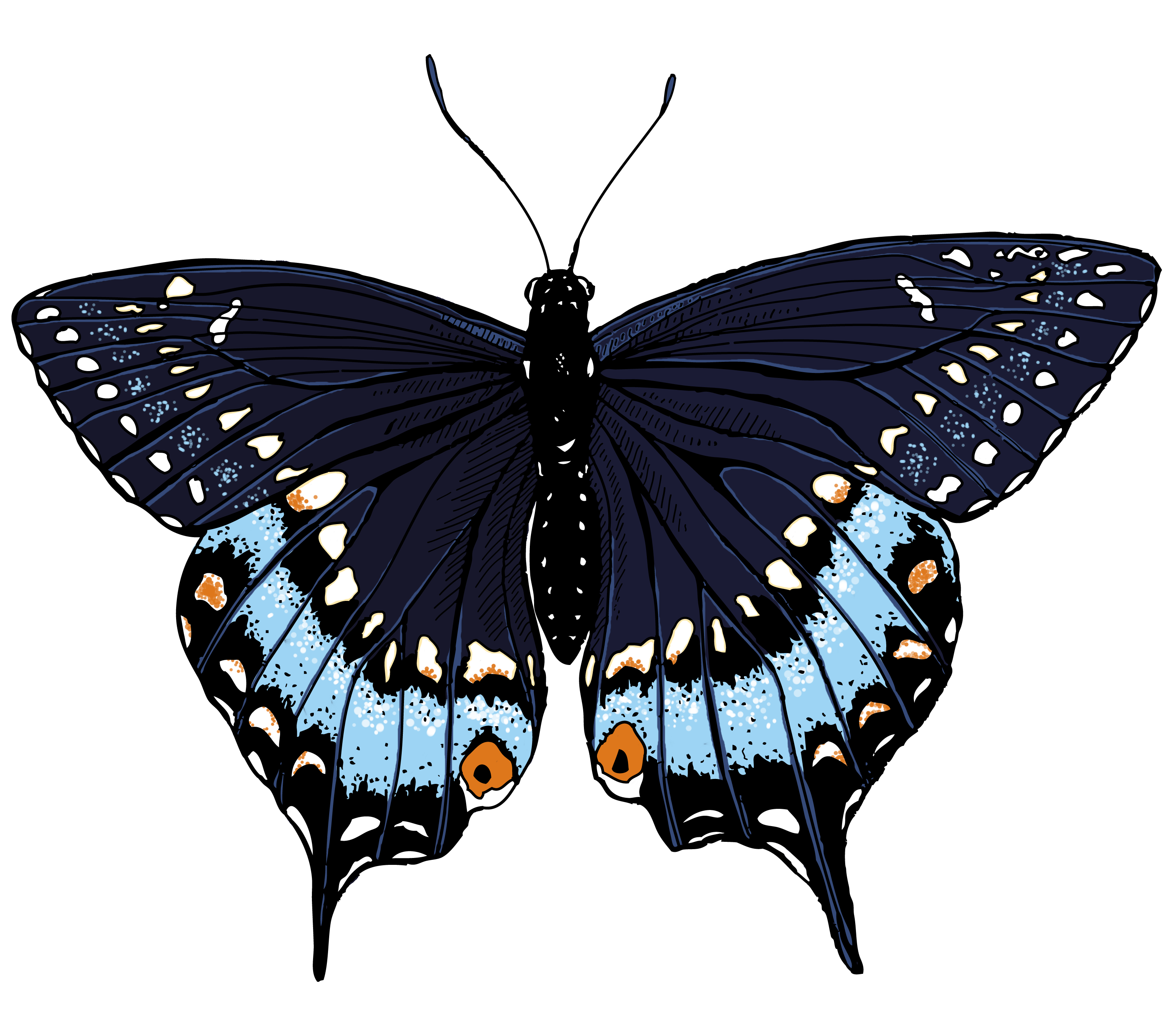 Swallowtail butterfly clipart.