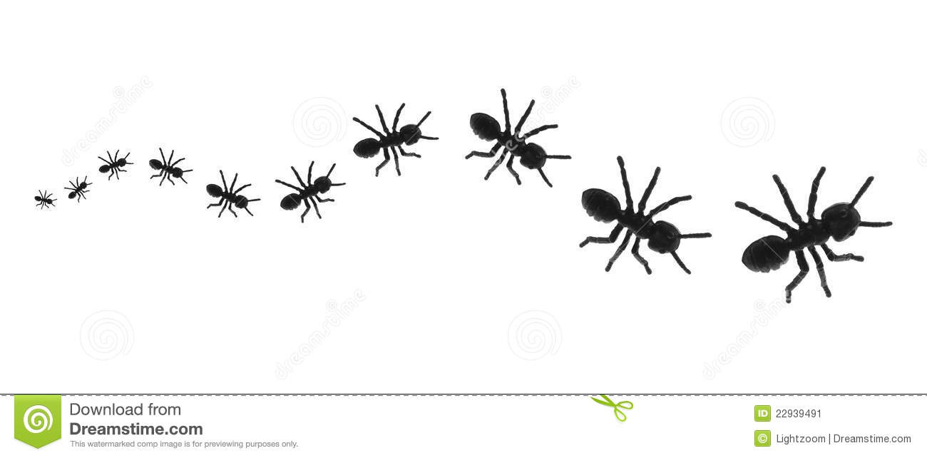 Ant trail clipart.