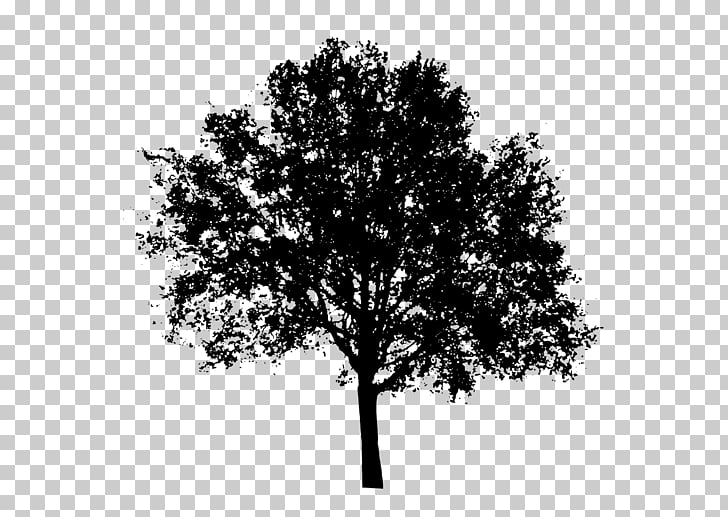 Tree Silhouette , tree , black tree illustration PNG clipart.