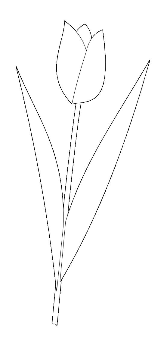 Tulips Image.