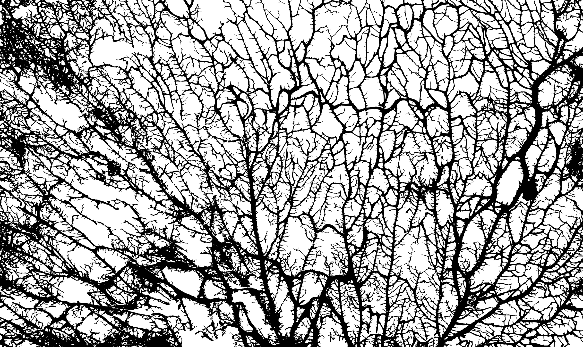 Black Veins Png Transparent Background Monochrome.