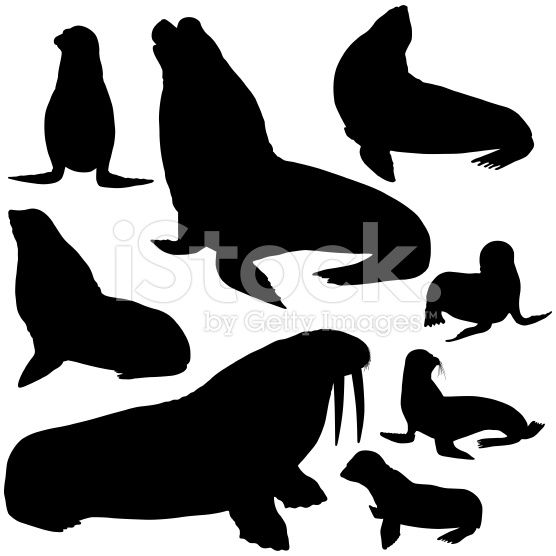 Detailed seals, sea Lions and walrus silhouettes.