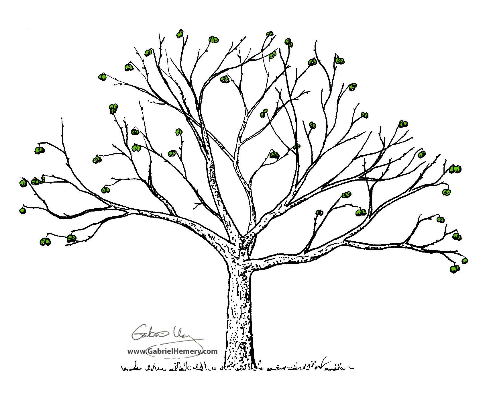 Walnut tree black and white clipart.