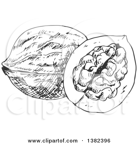 Clipart of Black and White Sketched Walnuts.