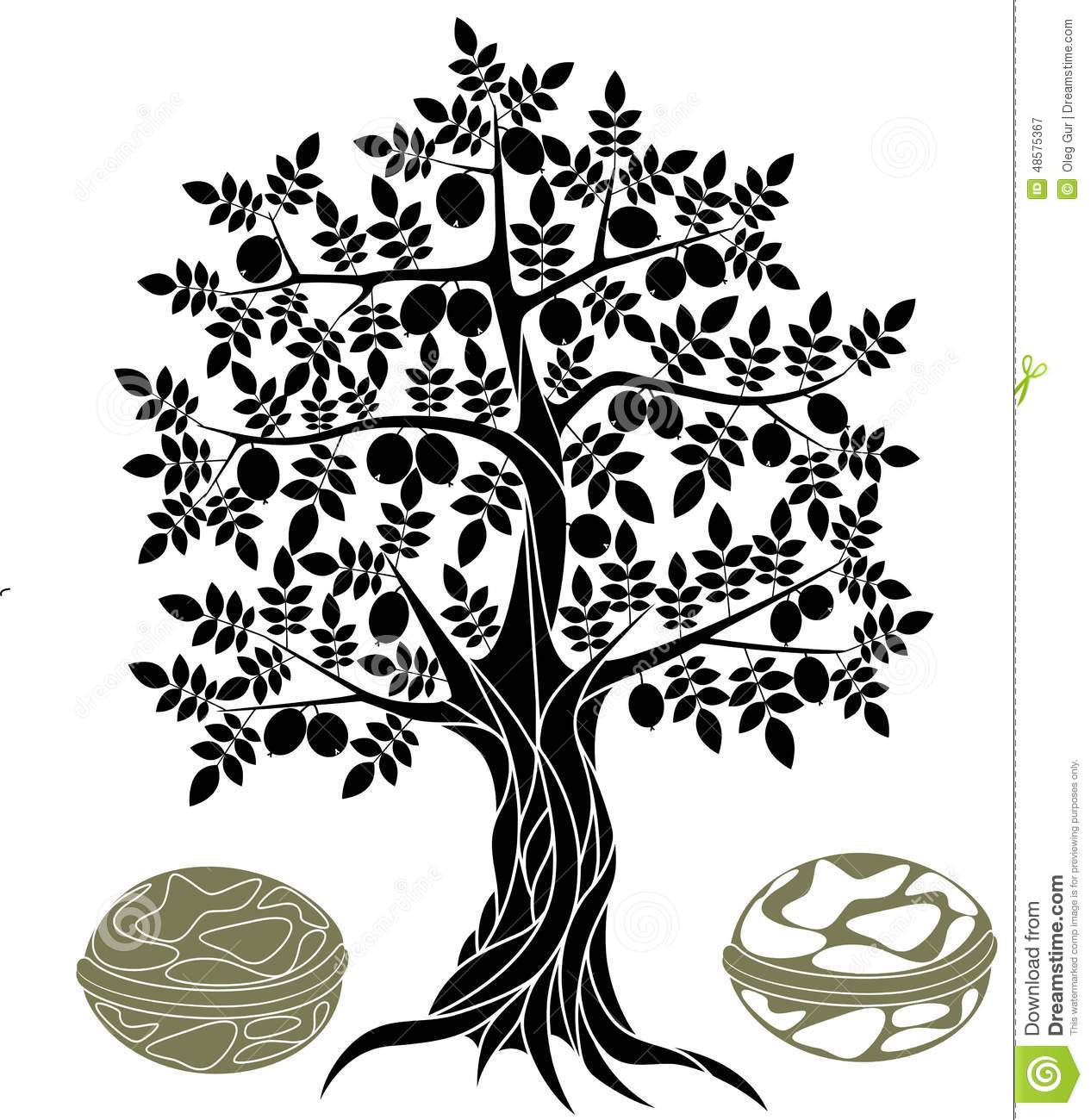 Walnut tree clipart clipart.