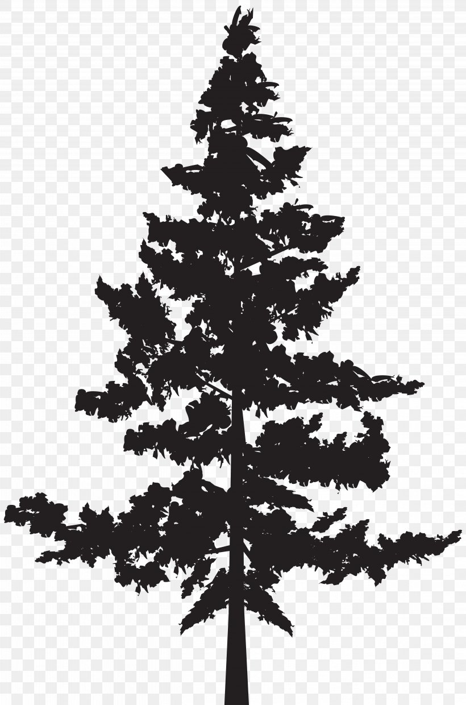 Black Pine Tree Pinus Contorta, PNG, 5287x8000px, Pine.
