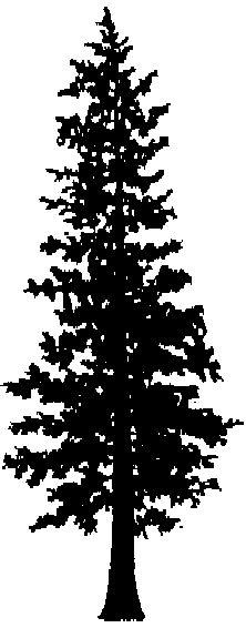 Free Cedar Tree Cliparts, Download Free Clip Art, Free Clip.