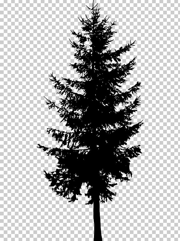 Spruce Fir Cedar Tree Larch PNG, Clipart, Black And White.