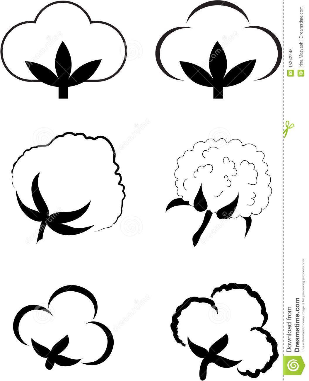 cotton plant images.