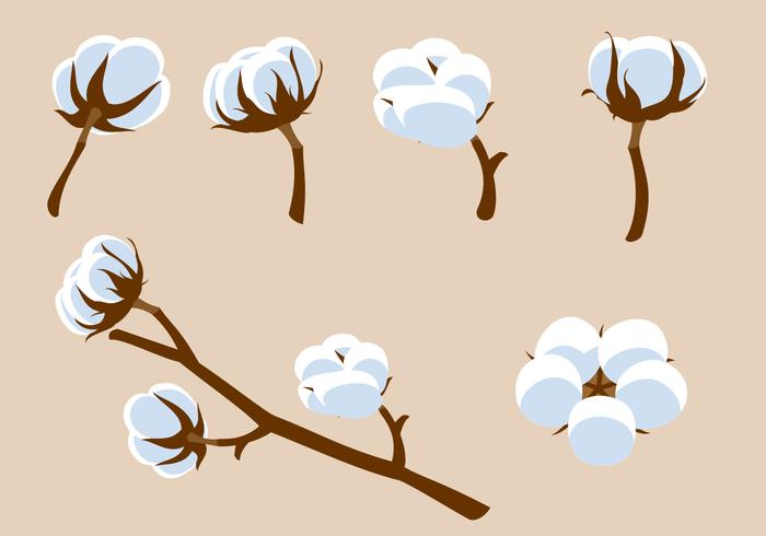 Cotton Flower Free Vector.