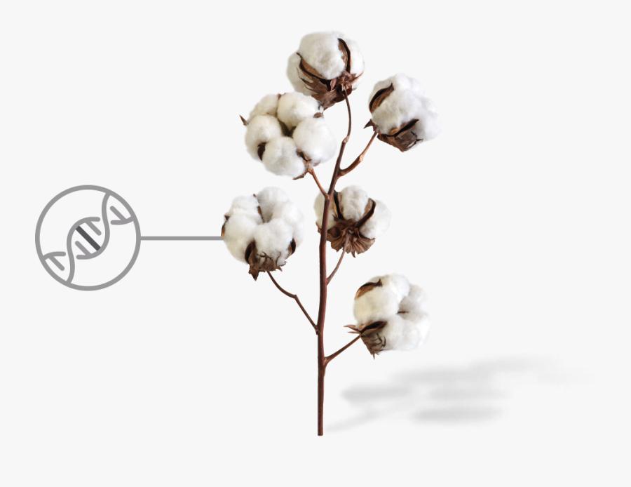 Clip Art Cotton Flowers.