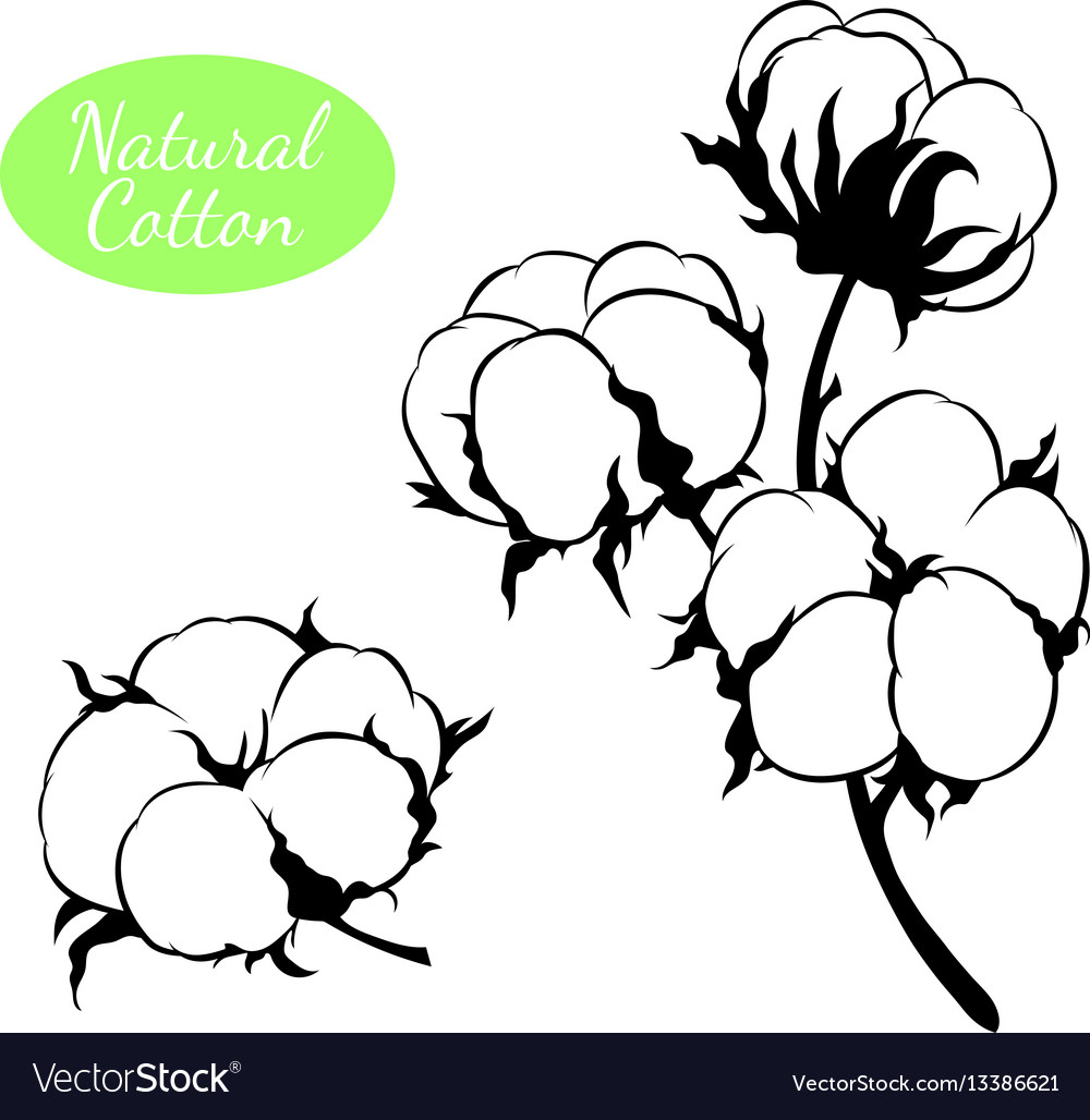 Set of cotton plant branch with flowers.
