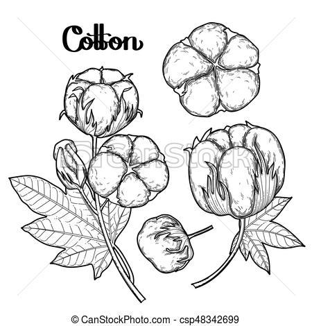 Graphic cotton plants.