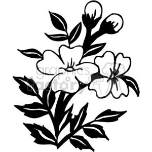 Two Black and white flowers clipart. Royalty.