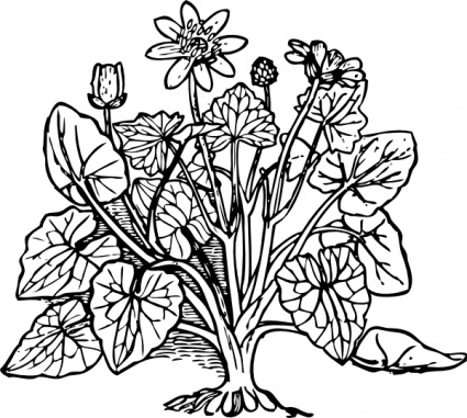 Plants And Flowers Clipart Black And White.