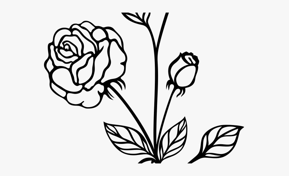 White Rose Clipart Phool.
