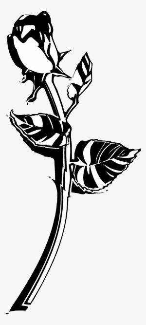 Black And White Rose PNG, Transparent Black And White Rose PNG Image.