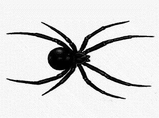 Black widow spider clipart.
