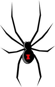 black widow spider bite pictureshttp://medicaltreasure.com/black.