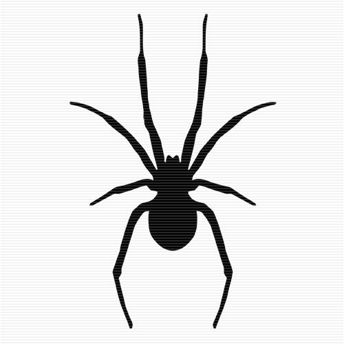 collection of spider. Spiders clipart simple.