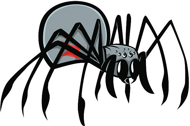 Best Black Widow Spider Illustrations, Royalty.