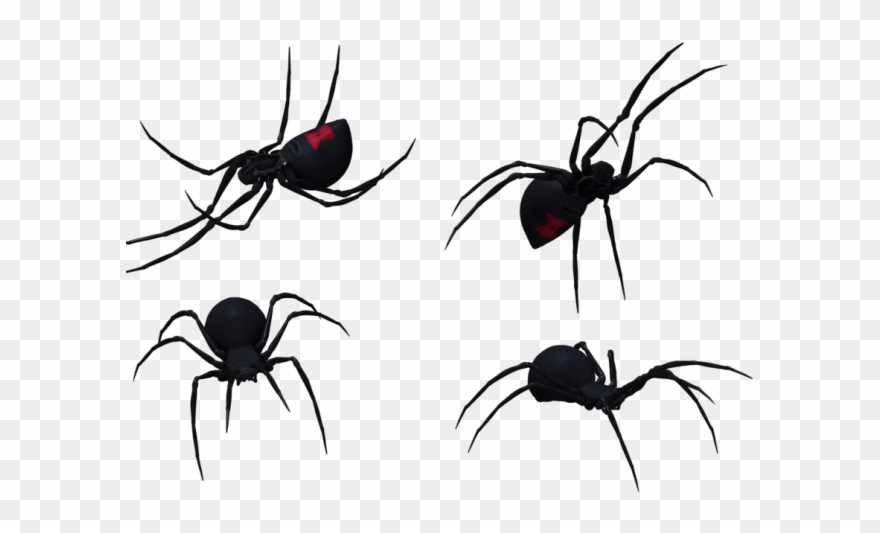 Spider Clipart Black Widow Spider.
