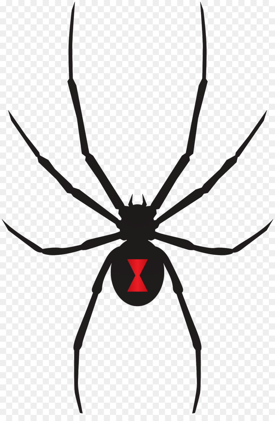 Black Widow Spider Png (109+ images in Collection) Page 3.