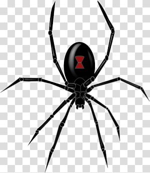 Southern black widow Redback spider Drawing , Spider File.